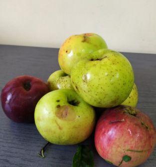 Jabłka - stare tradycyjne odmiany